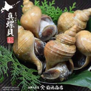 真螺貝(まつぶがい)